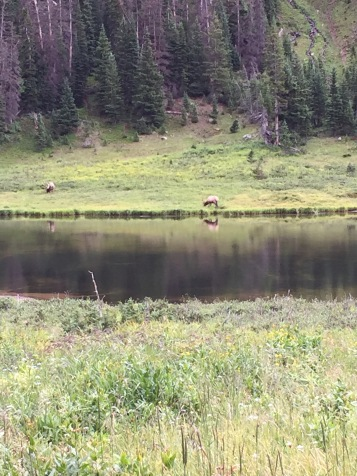 Elk - amazing experience watching these creatures!